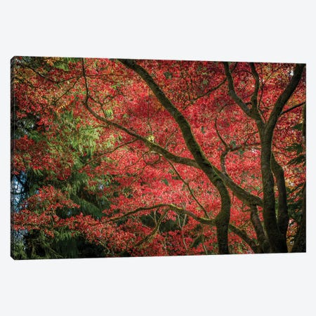 Autumn Beauty Canvas Print #TOL15} by Tim Oldford Art Print