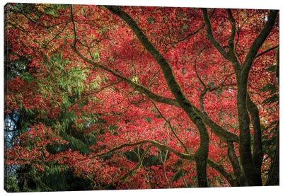 Autumn Beauty Canvas Art Print
