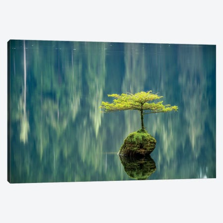 Fairy Lake Bonsai Canvas Print #TOL4} by Tim Oldford Canvas Print