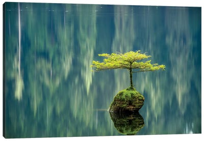 Fairy Lake Bonsai Canvas Art Print