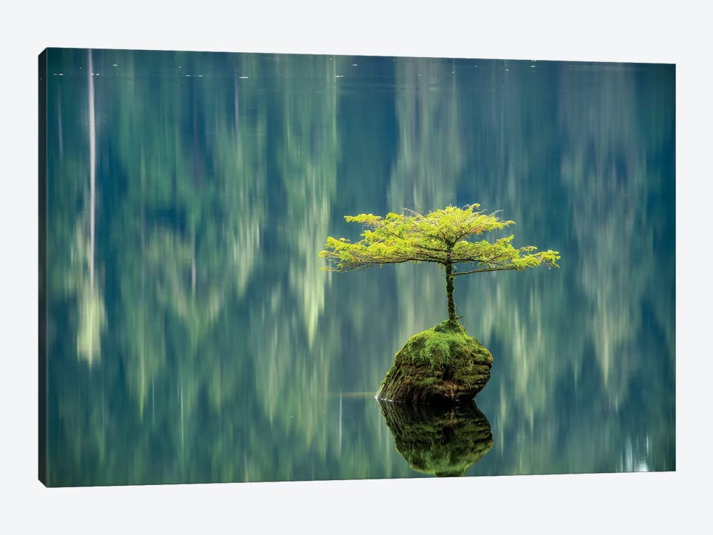 Fairy Lake Bonsai by Tim Oldford 1-piece Art Print