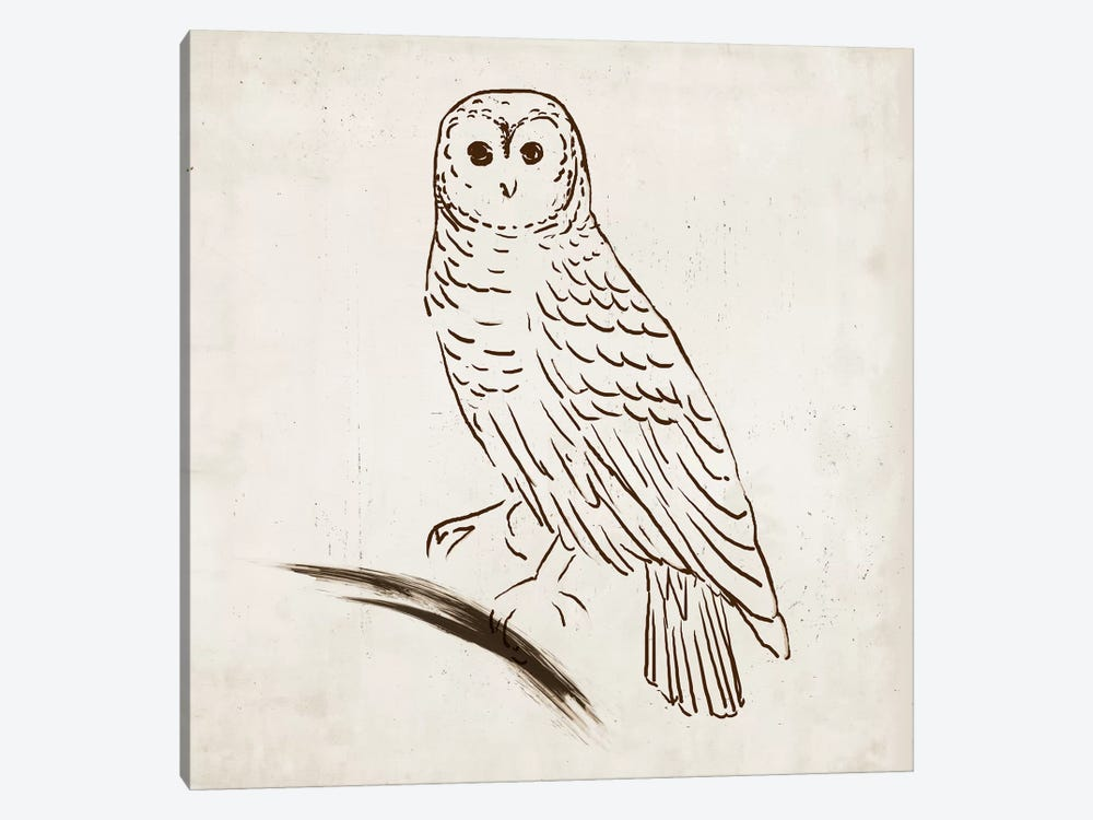 Owl I by Tom Reeves 1-piece Canvas Wall Art