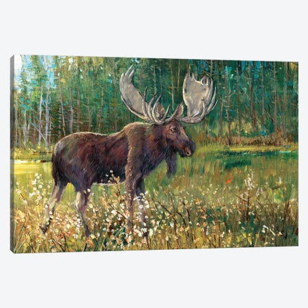 Moose In The Field Canvas Print #TOT112} by Tim OToole Art Print