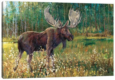 Moose In The Field Canvas Art Print