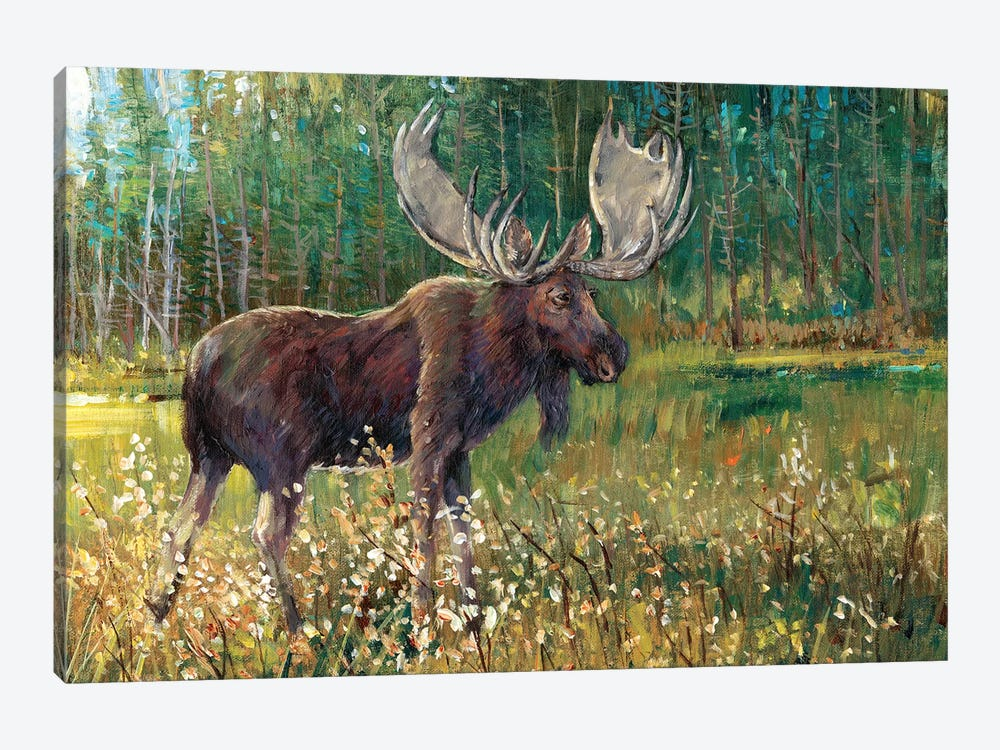 Moose In The Field by Tim OToole 1-piece Canvas Print