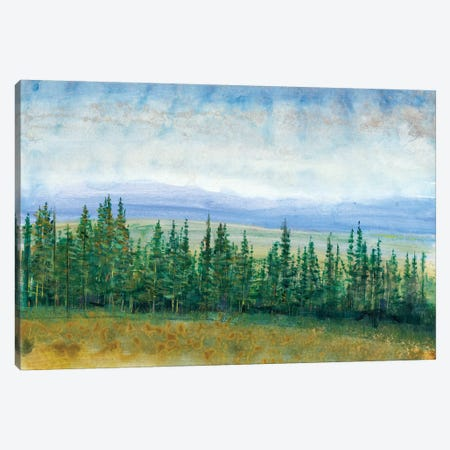 Pine Tops I Canvas Print #TOT115} by Tim OToole Canvas Artwork