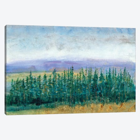 Pine Tops II Canvas Print #TOT116} by Tim OToole Canvas Wall Art