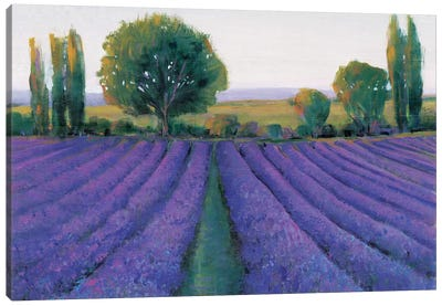 Lavender Field II Canvas Print #TOT11