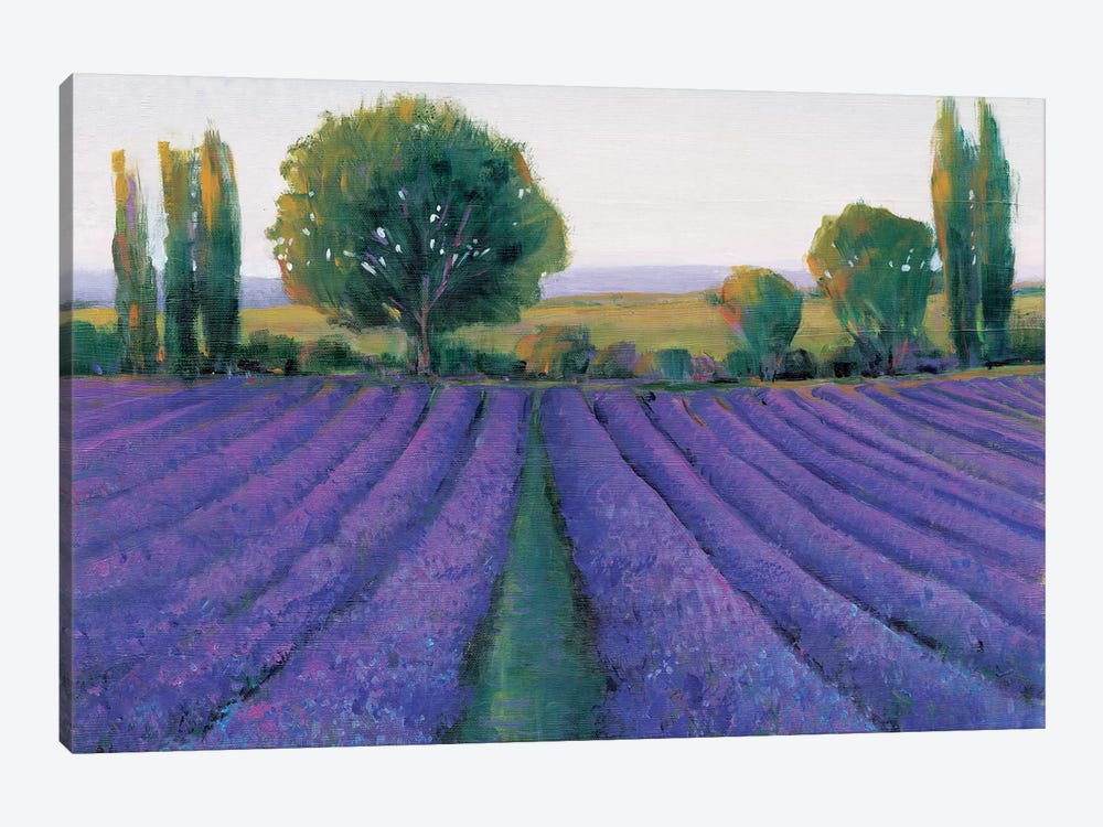 Lavender Field II by Tim O'Toole 1-piece Art Print