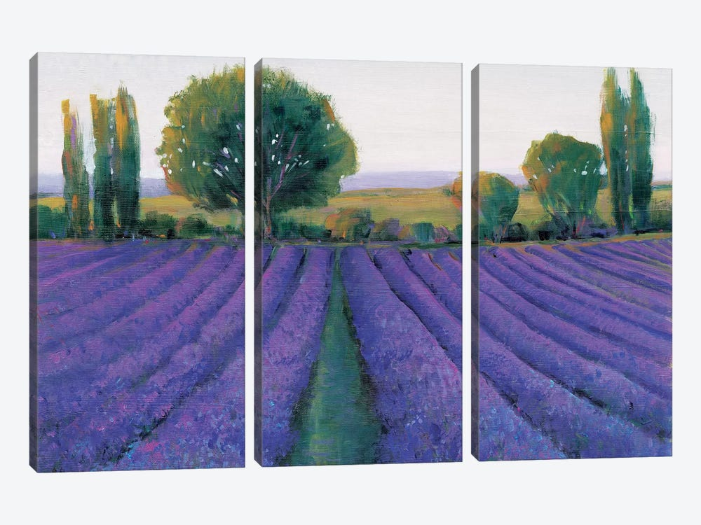 Lavender Field II by Tim O'Toole 3-piece Canvas Art Print