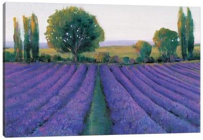Lavender Field II Canvas Art Print