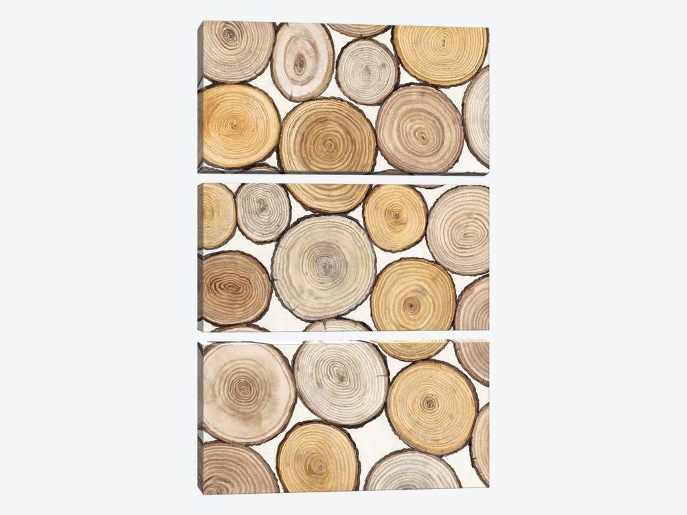 Tree Ring Study I by Tim OToole 3-piece Art Print