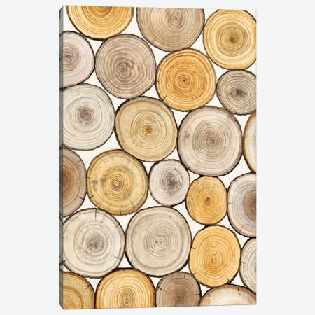 Tree Ring Study II Canvas Print #TOT122} by Tim OToole Canvas Wall Art