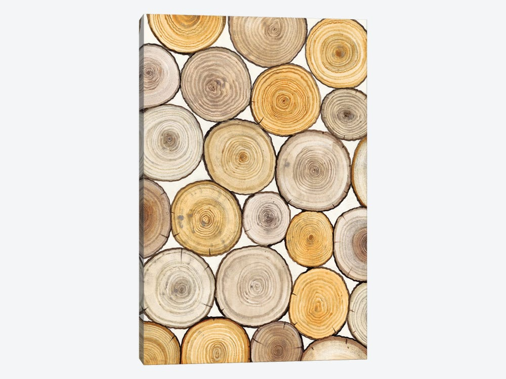Tree Ring Study II by Tim OToole 1-piece Canvas Wall Art