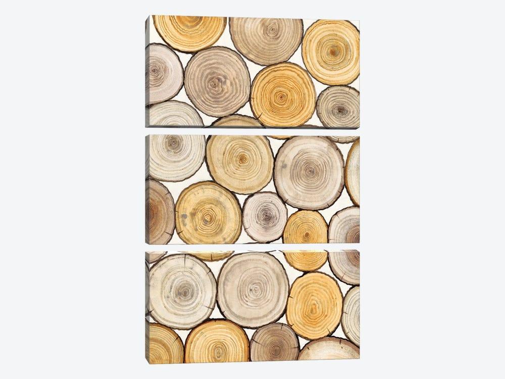 Tree Ring Study II 3-piece Canvas Artwork