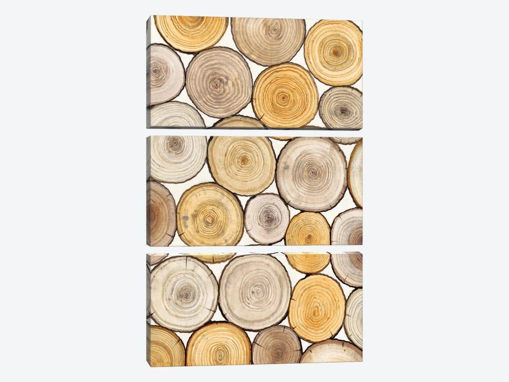 Tree Ring Study II by Tim OToole 3-piece Canvas Artwork