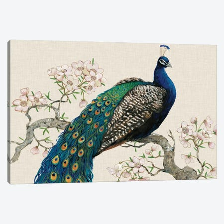 Peacock & Blossoms I Canvas Print #TOT12} by Tim OToole Canvas Artwork