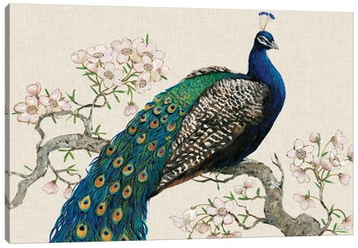 Peacock & Blossoms I Canvas Art Print