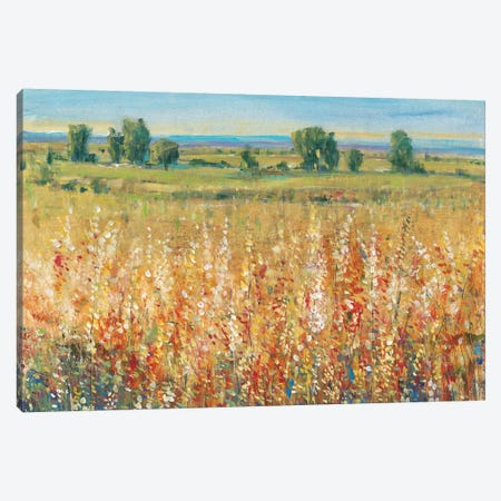 Gold and Red Field II Canvas Print #TOT136} by Tim OToole Canvas Artwork