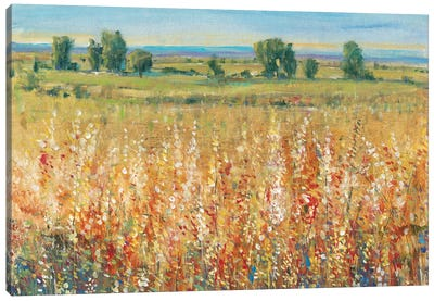 Gold and Red Field II Canvas Art Print