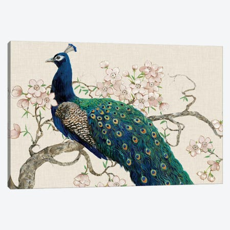 Peacock & Blossoms II Canvas Print #TOT13} by Tim OToole Canvas Art