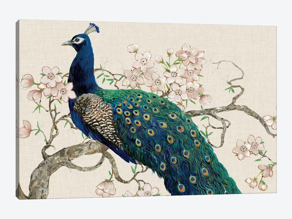 Peacock & Blossoms II by Tim O'Toole 1-piece Canvas Print