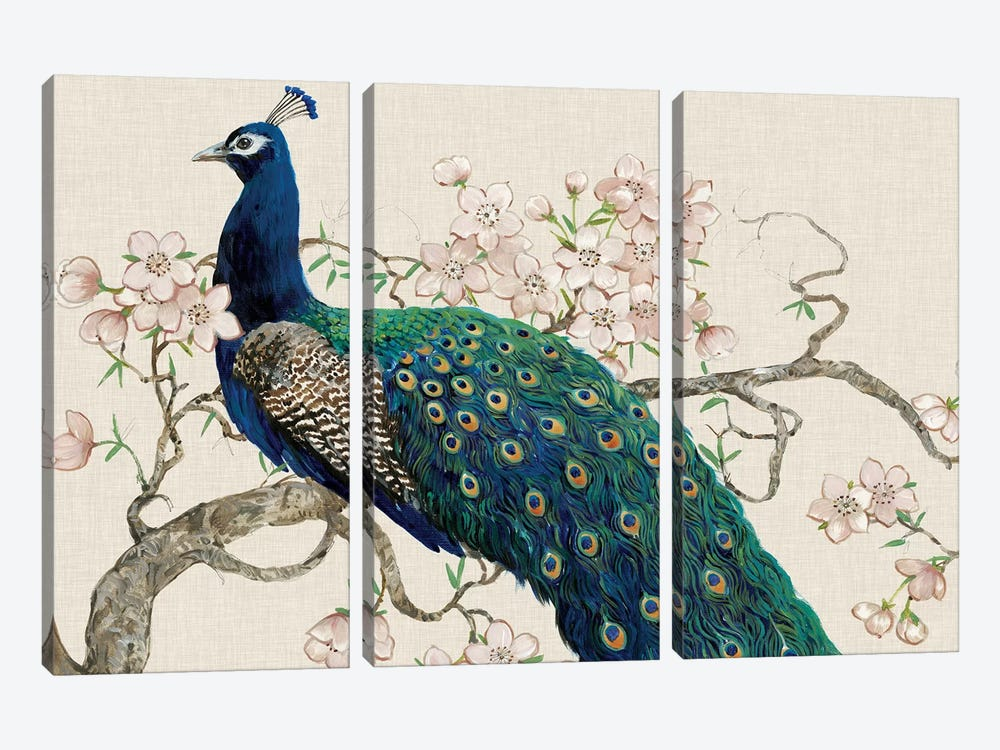 Peacock & Blossoms II by Tim O'Toole 3-piece Canvas Art Print