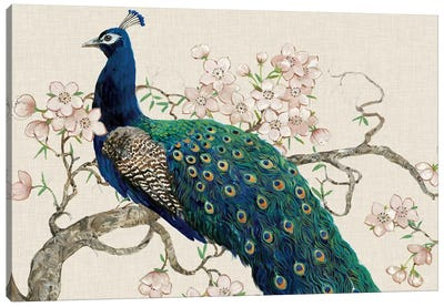 Peacock & Blossoms II Canvas Art Print