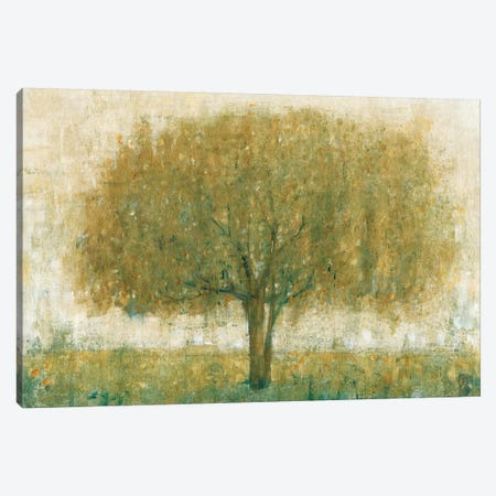 Summer Day Tree II Canvas Print #TOT159} by Tim OToole Canvas Print