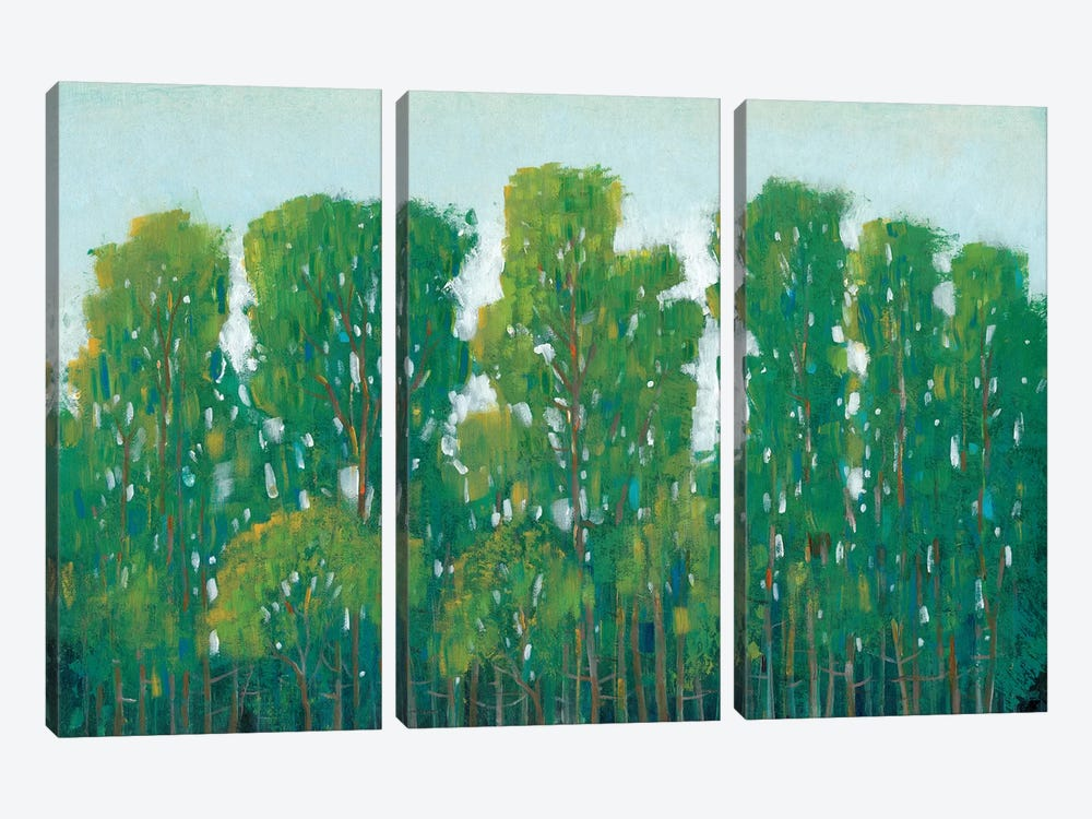 Forest Green I by Tim OToole 3-piece Canvas Wall Art