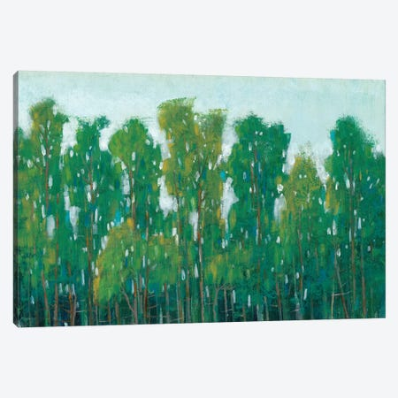 Forest Green II Canvas Print #TOT181} by Tim OToole Canvas Wall Art