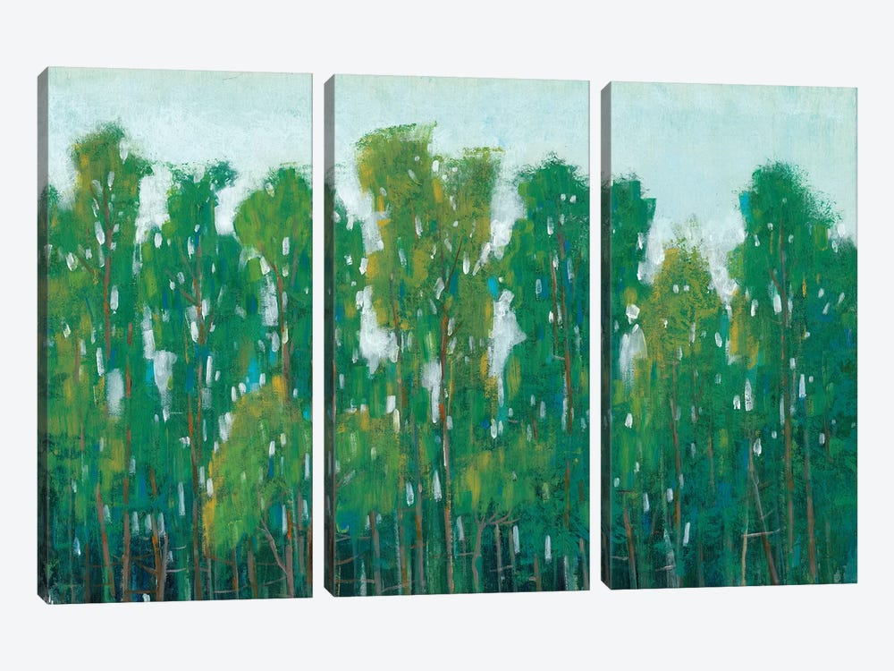 Forest Green II by Tim OToole 3-piece Canvas Art Print