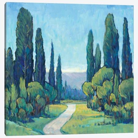 Cypress Path I 3-Piece Canvas #TOT192} by Tim OToole Canvas Art Print
