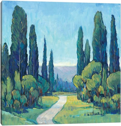 Cypress Path I Canvas Art Print