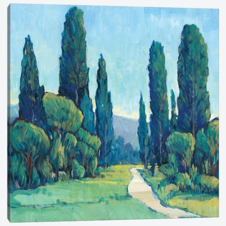 Cypress Path II Canvas Print #TOT193} by Tim OToole Canvas Art Print