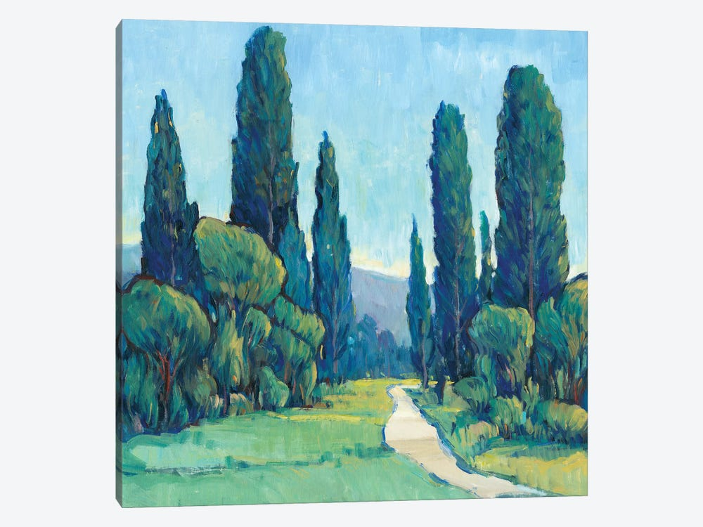 Cypress Path II by Tim OToole 1-piece Canvas Artwork