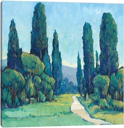 Cypress Path II Canvas Art Print