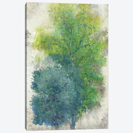 A Pair Of Trees II Canvas Print #TOT20} by Tim OToole Canvas Art Print