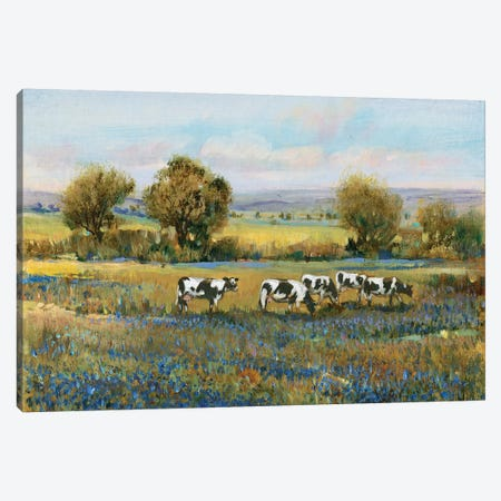 Field Of Cattle I Canvas Print #TOT240} by Tim OToole Canvas Print