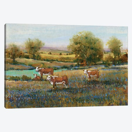 Field Of Cattle II Canvas Print #TOT241} by Tim OToole Canvas Art Print