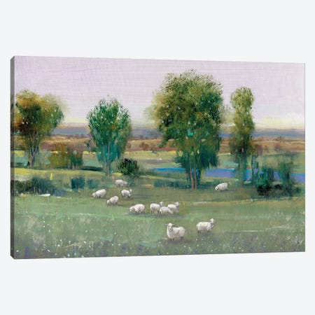 Field Of Sheep I 3-Piece Canvas #TOT242} by Tim OToole Canvas Art Print