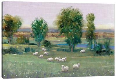 Field Of Sheep I Canvas Art Print