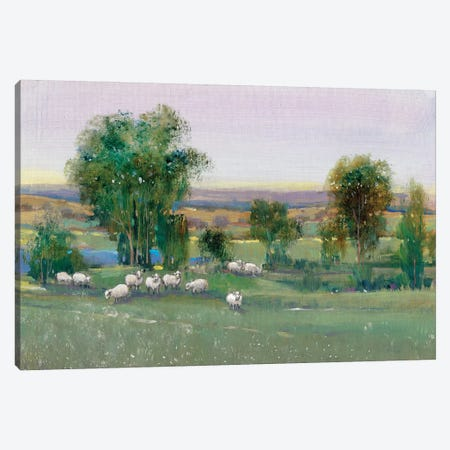 Field Of Sheep II 3-Piece Canvas #TOT243} by Tim OToole Art Print