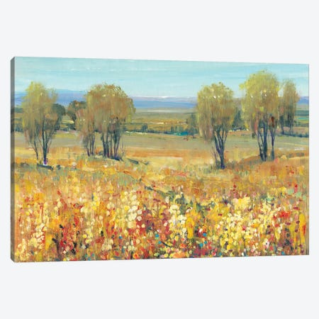 Golden Fields II Canvas Print #TOT251} by Tim OToole Canvas Wall Art