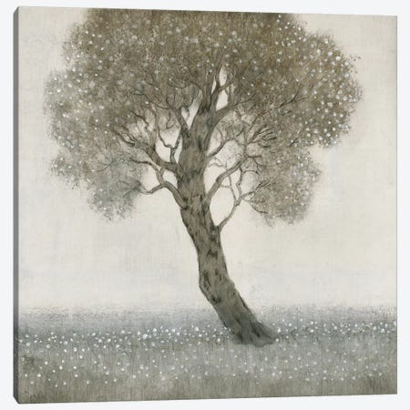 White Blossom Tree 3-Piece Canvas #TOT276} by Tim OToole Canvas Print