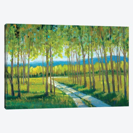 Morning Stroll II Canvas Print #TOT287} by Tim OToole Canvas Wall Art