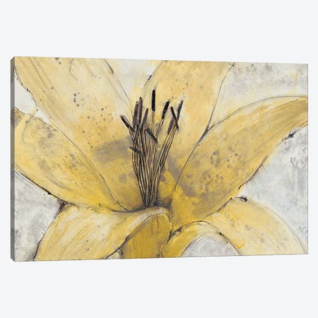 Transparency Flower I Canvas Print #TOT294} by Tim OToole Canvas Art Print