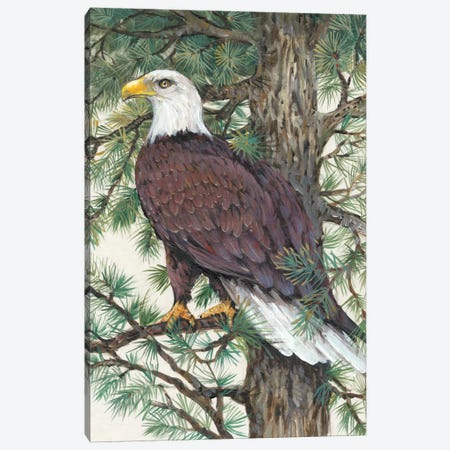 Eagle In The Pine Canvas Print #TOT29} by Tim OToole Canvas Print