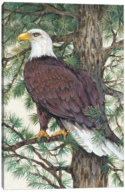 Eagle In The Pine Canvas Art Print