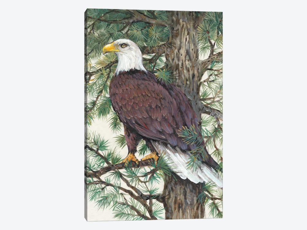 Eagle In The Pine by Tim OToole 1-piece Canvas Art